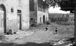 1978-09 l'aia della Pieve Vecchia, non so di chi siano le capre