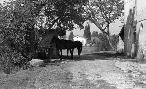 1978-09 I cavalli davanti al pozzo, ma di chi son?
